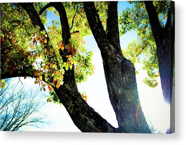 Landscape Acrylic Print featuring the photograph Tree With Light by Jonah Vang