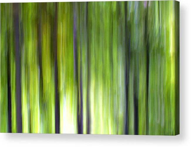 Trees Acrylic Print featuring the photograph Trees by Silke Magino