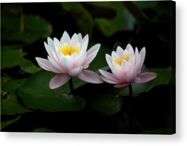 Waterlily Acrylic Print featuring the photograph W A T E R L I L I E S by Thomas Herzog