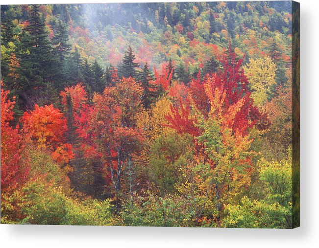 New Hampshire Acrylic Print featuring the photograph White Mountain Foliage by John Burk