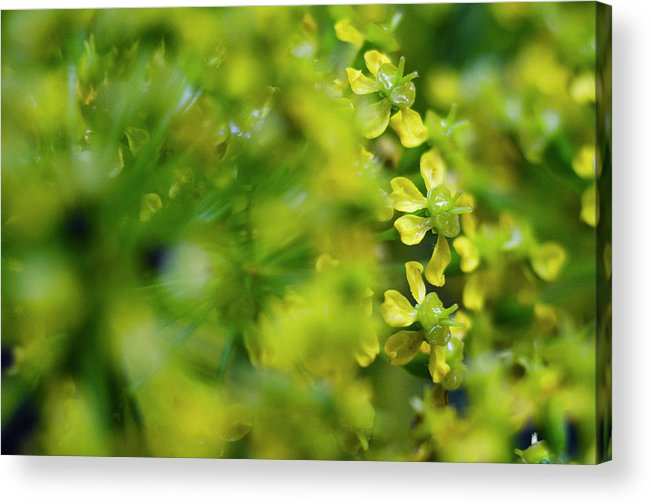 Real Acrylic Print featuring the photograph Royal Botanical Garden Of Madrid by Pablo Lopez