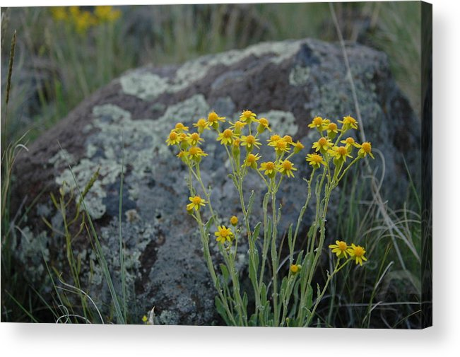 Flowers Acrylic Print featuring the photograph Untitled by Kathy Schumann