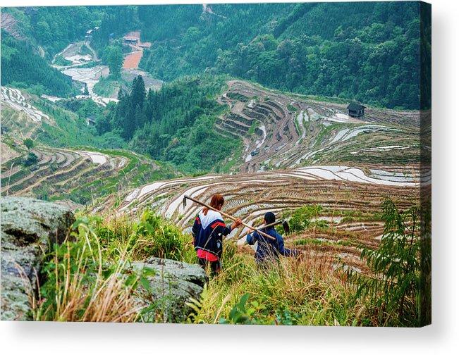 Terrace Acrylic Print featuring the photograph Longji Terraced Fields Scenery by Carl Ning