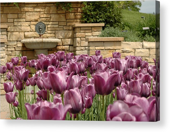 Flora Acrylic Print featuring the photograph Untitled by Kathy Schumann