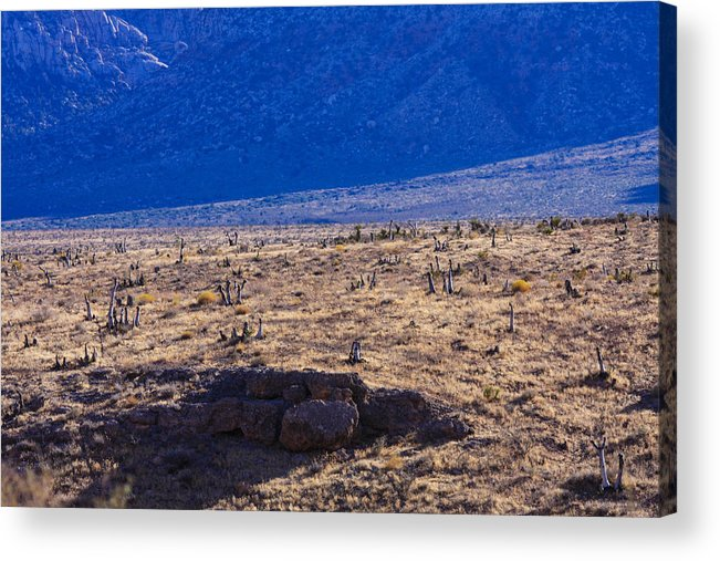 Cactus Acrylic Print featuring the photograph Cactus by William Rogers