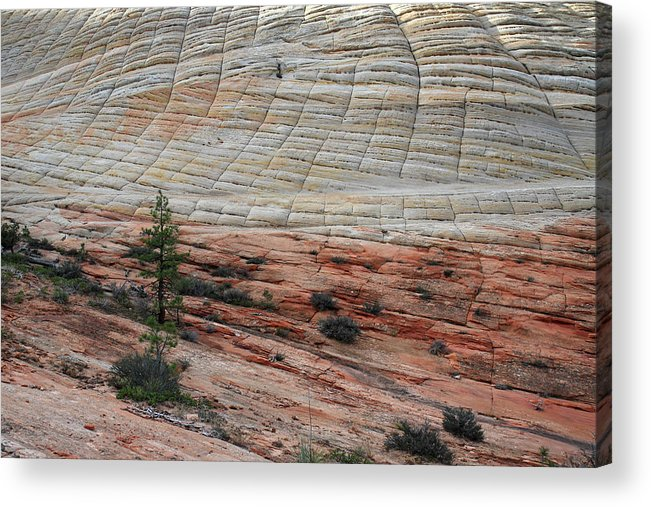 Zion Acrylic Print featuring the photograph Checkerboard Mesa In Zion National Park by Pierre Leclerc Photography