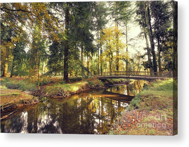 Svetlana Sewell Acrylic Print featuring the photograph River by Svetlana Sewell