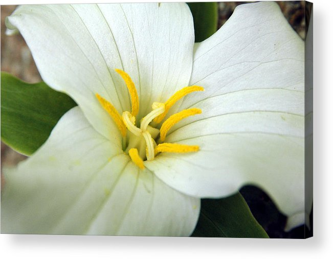 White Acrylic Print featuring the photograph Untitled by Kathy Schumann
