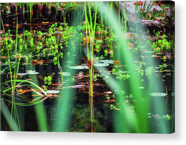 Water Acrylic Print featuring the photograph Japanese Garden by Jeff Chapman
