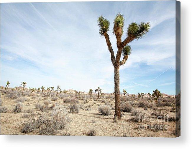 Joshua Tree Acrylic Print featuring the photograph Joshua Tree National Park, California by Gal Eitan