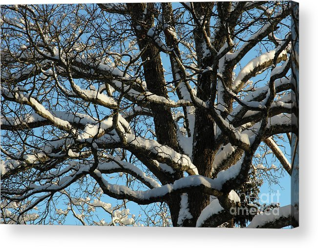 Tree Acrylic Print featuring the photograph Snowy Trees Against A Blue Sky by Kerstin Ivarsson