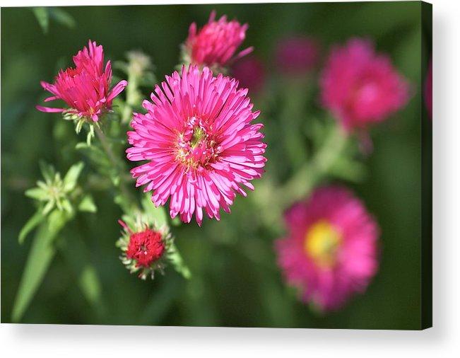 Summer Acrylic Print featuring the photograph 3d Flower by Robert Joseph