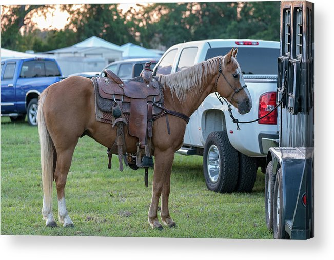 Rodeo Acrylic Print featuring the photograph Horse by Glenn Matthews