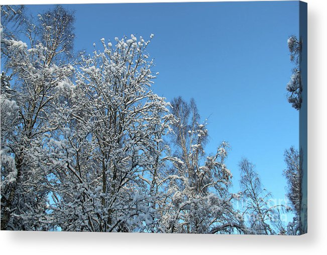 Trees Acrylic Print featuring the photograph Snowy Trees Against A Blue Sky by Kerstin Ivarsson