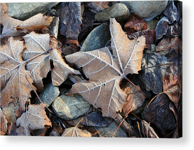 Leaf Acrylic Print featuring the photograph Untitled by Kathy Schumann