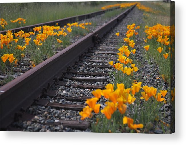 Flowers Acrylic Print featuring the photograph Flowers by Luke Robertson