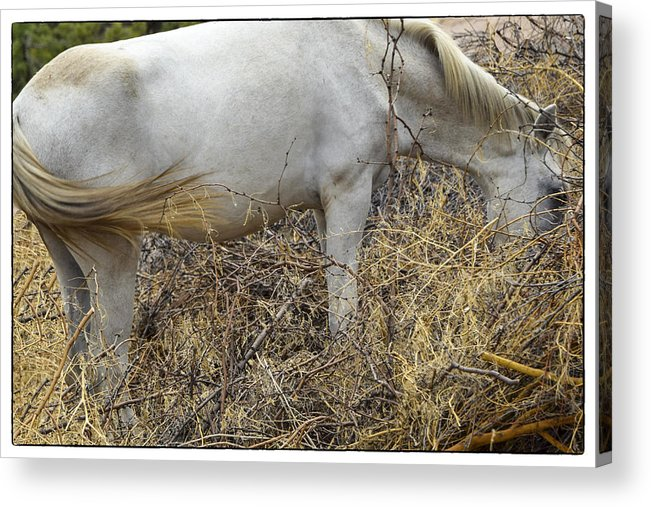 Horse Acrylic Print featuring the photograph Wild Mustangs by Marit Runyon