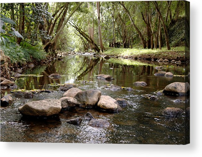 Nature Acrylic Print featuring the photograph Untitled by Kathy Schumann