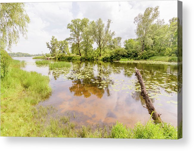 Dnieper Acrylic Print featuring the photograph Reeds And Water Lilies In The River by Alain De Maximy