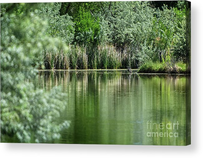 Pond Acrylic Print featuring the photograph A Cool Drink Of Spring by Susan Warren