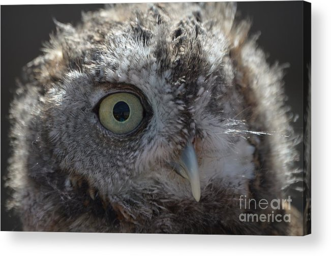 Rescue Acrylic Print featuring the photograph A Eye On You by Jodie Sims