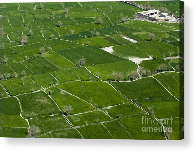 Field Acrylic Print featuring the photograph A Patch Work Of Green by Tim Grams