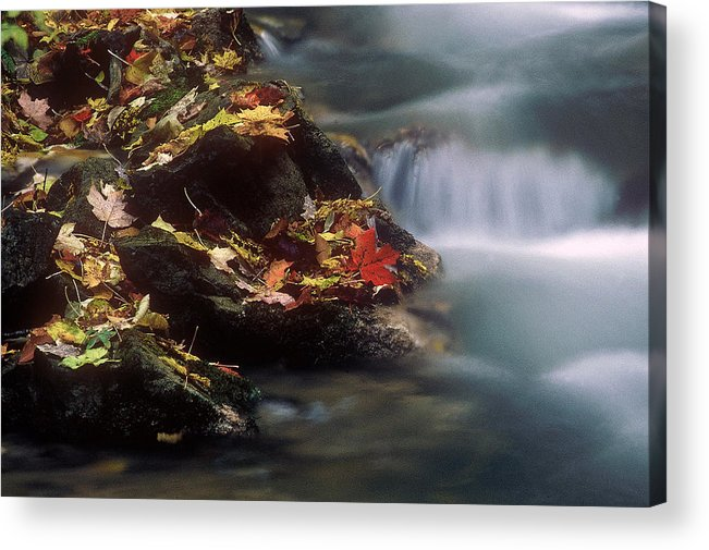 River Acrylic Print featuring the photograph A Special Place by D'Arcy Evans
