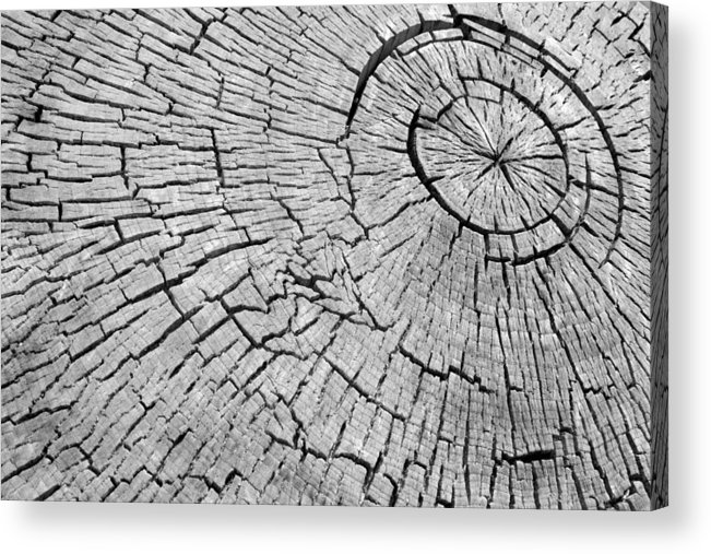 Trees Acrylic Print featuring the photograph Abstract Tree Cut by James BO Insogna