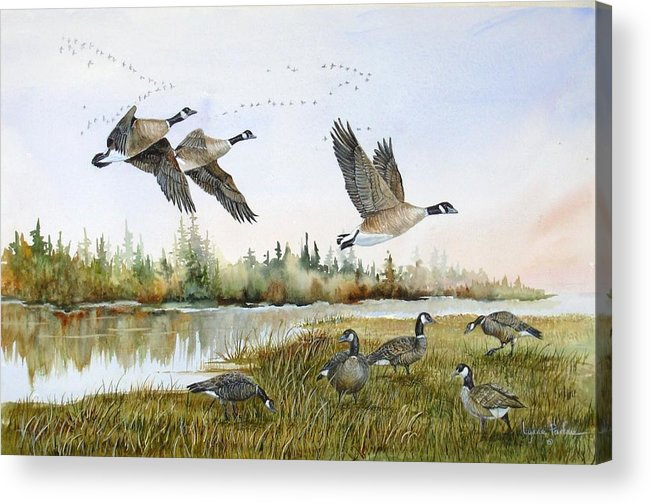 Aleutian Geese Acrylic Print featuring the painting Aleutian Geese At Lake Earl by Lynne Parker