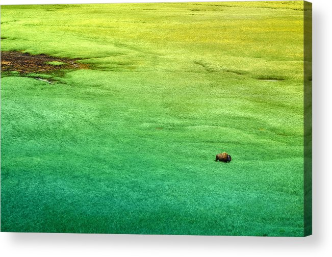 Usa Acrylic Print featuring the photograph Alone by Radek Spanninger