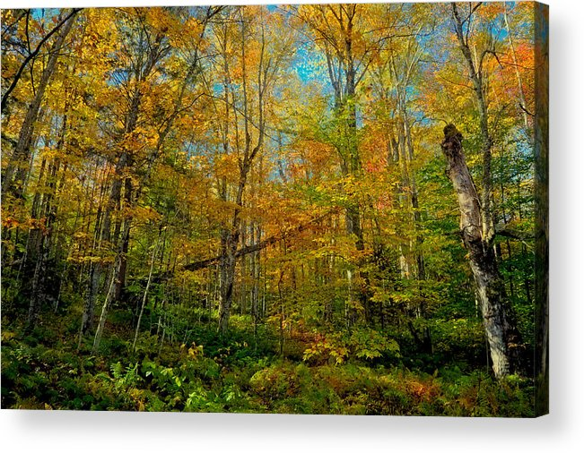 Along The Lock And Dam Trail Acrylic Print featuring the photograph Along The Lock And Dam Trail by David Patterson