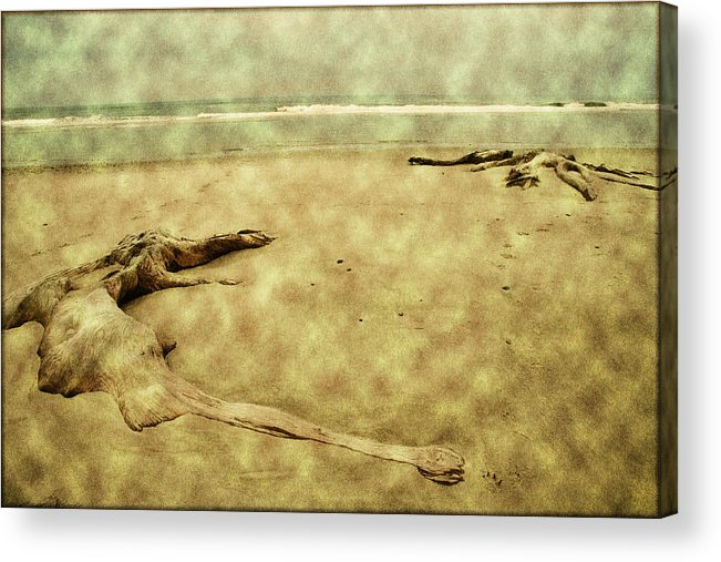 Oregon Beach Acrylic Print featuring the photograph Ancient Tree Roots by Bonnie Bruno