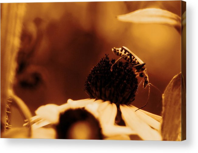 Leatherwing Acrylic Print featuring the photograph Anyone Else Down There - Gold Glow by Angela Rath