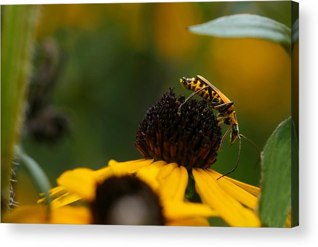 Leatherwing Acrylic Print featuring the photograph Anyone Else Down There by Angela Rath