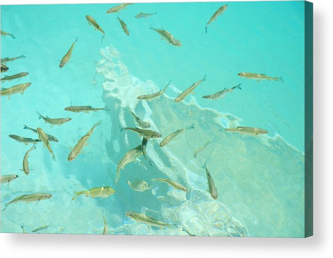 Fish Acrylic Print featuring the photograph Aquarium by Elisa Locci