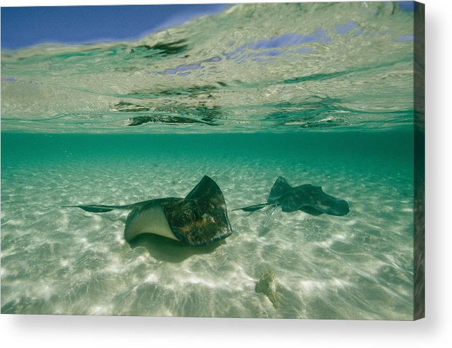 Atlantic Islands Acrylic Print featuring the photograph Aquatic Split-level View Of Two by Wolcott Henry