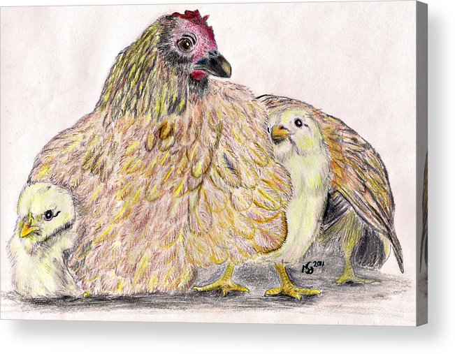 Chickens Acrylic Print featuring the drawing As A Hen Gathereth Her Chickens Under Her Wings by Marqueta Graham