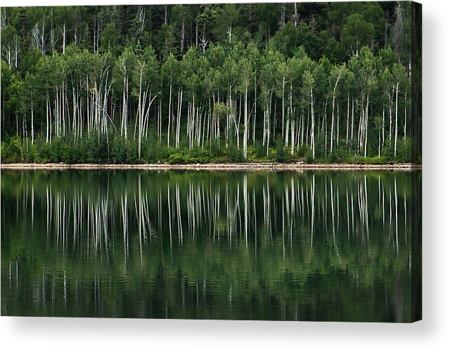 Landscape Acrylic Print featuring the photograph Aspen Reflections by Kris and Sydney Riccella Kitzmiller