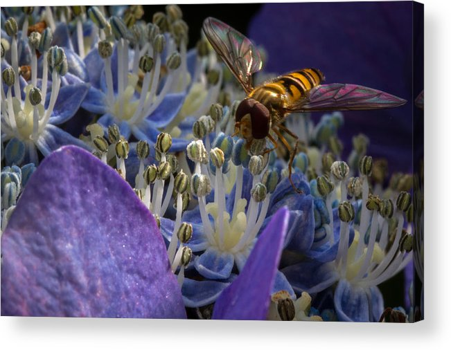 Nature Acrylic Print featuring the photograph At Work by Andreas Levi
