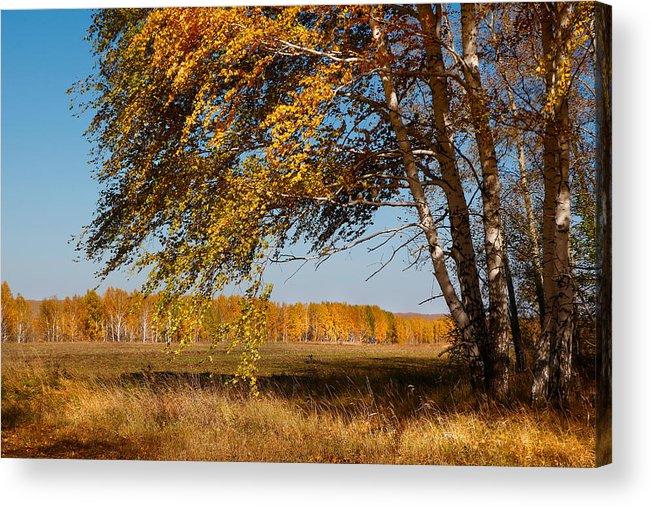 Autumn Acrylic Print featuring the photograph Autumn Breeze by Victor Kovchin