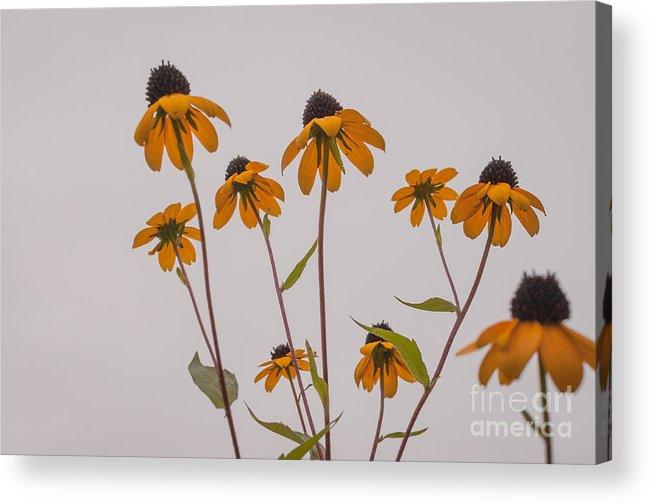 Landscape Acrylic Print featuring the photograph Autumn Card by Lyudmila Prokopenko