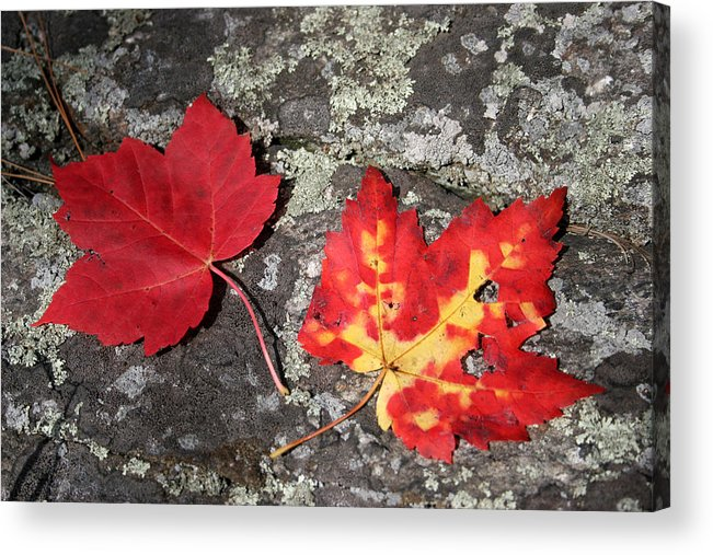 Tranquility Acrylic Print featuring the photograph Autumn Colors by Kate Leikin