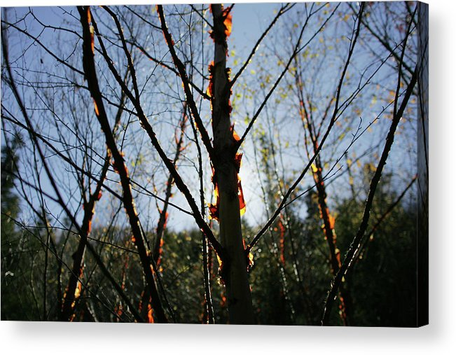 Trees Acrylic Print featuring the photograph Autumn Forest by Kam Chuen Dung