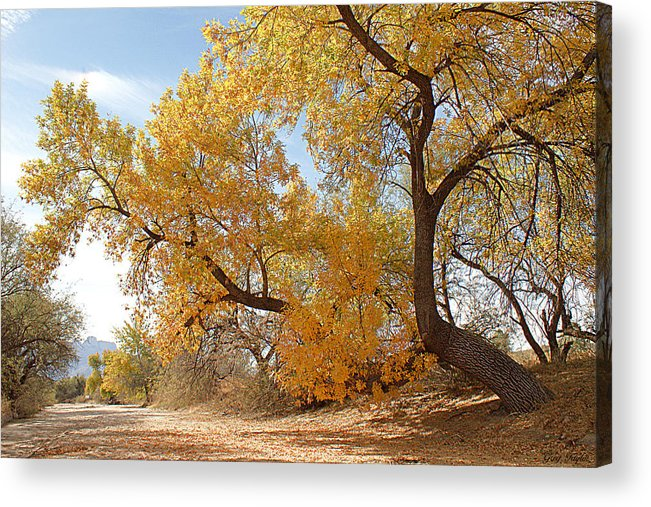 Autumn Acrylic Print featuring the photograph Autumn In Cdo Wash by Greg Taylor
