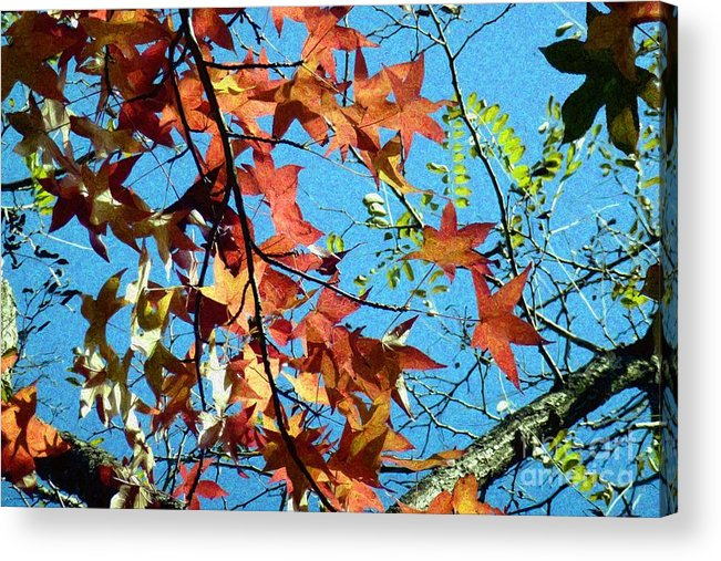 Autumn Acrylic Print featuring the photograph Autumn Leaves 4 by Jean Bernard Roussilhe
