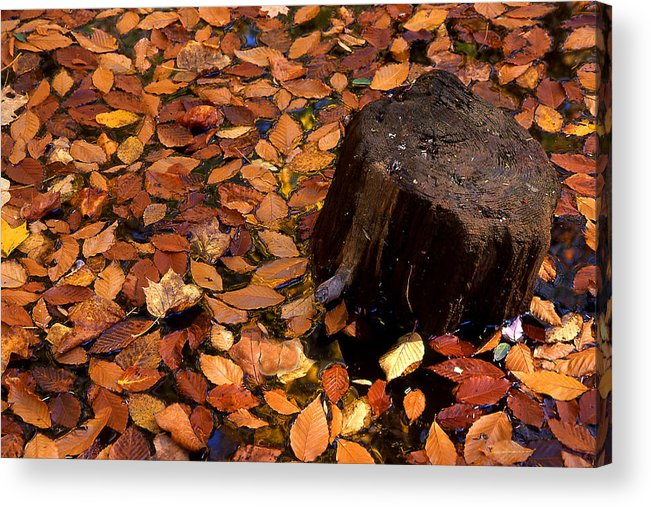 Autumn Acrylic Print featuring the photograph Autumn Leaves And Tree Stump by Barry Shaffer