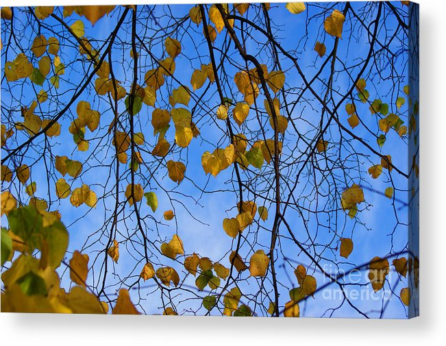 Autumn Acrylic Print featuring the photograph Autumn Leaves by Carol Lynch