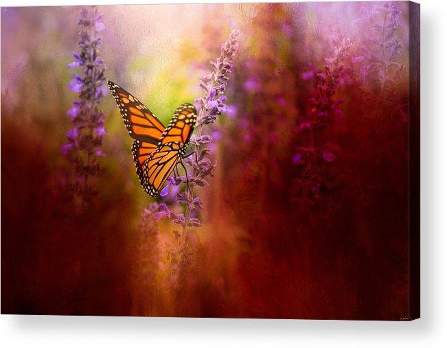 Jai Johnson Acrylic Print featuring the photograph Autumn Monarch by Jai Johnson