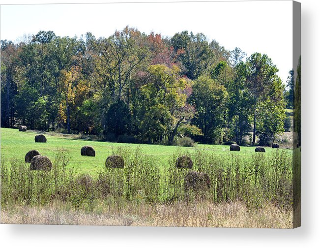 Landscapes Acrylic Print featuring the photograph Autumn Pastures by Jan Amiss Photography