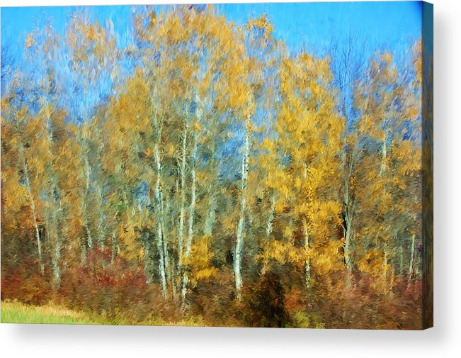 Acrylic Print featuring the photograph Autumn Woodlot by David Lane